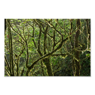 Costa Rican Canopy Poster