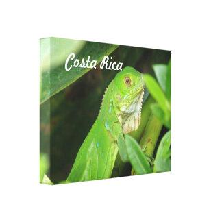 Costa Rican Lizard Stretched Canvas Print