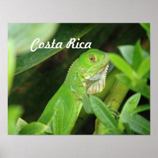 Costa Rican Lizard Print