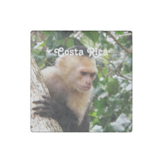 Costa Rican Monkey Stone Magnet at Zazzle