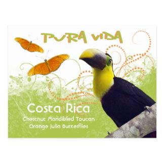 Costa Rican Pura Vida Toucan Postcard