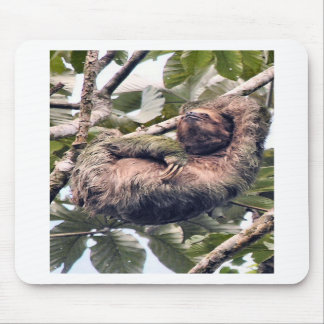 Costa. Rican sloth Mouse Pad