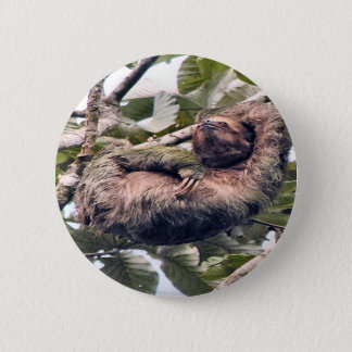 Costa Rican sloth Pinback Button