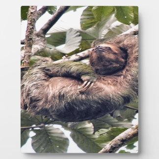 Costa Rican sloth Plaque