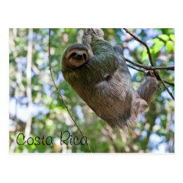 Costa Rican sloth Postcard