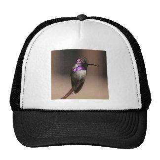 Costa s Hummingbird Hat