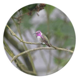Costa s Hummingbird Plate