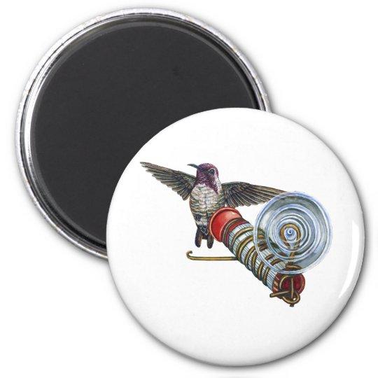 Costas Hummingbird at the Bird Feeder Magnet