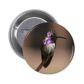 Costa's Hummingbird Buttons