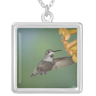 Costa's Hummingbird, Calypte costae, young Square Pendant Necklace