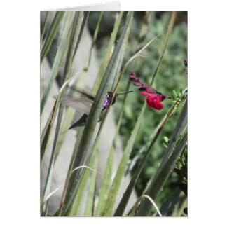 Costa's Hummingbird Stationery Note Card