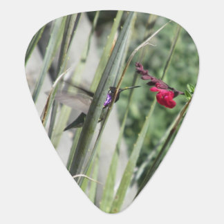 Costa's Hummingbird Groverallman Guitar Pick