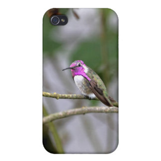 Costa's Hummingbird iPhone 4/4S Covers