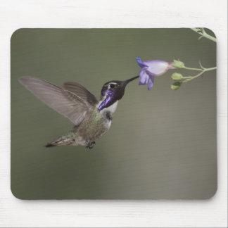 Costa's Hummingbird Mousepad