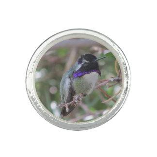 Costa's Hummingbird Rings