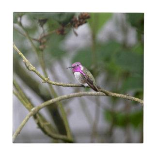Costa's Hummingbird Small Square Tile