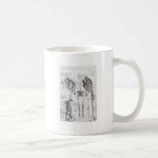 Costillas parciales y diagrama esquelético del vin tazas de café