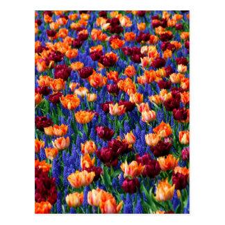 Cotillion del jardín del tulipán del jacinto tarjetas postales