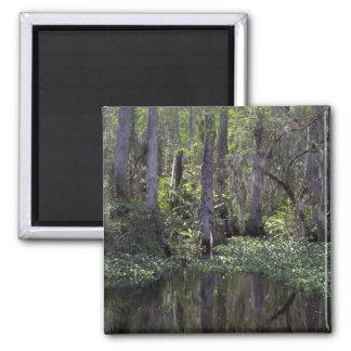Coto grande de Cypress, la Florida Imán Cuadrado