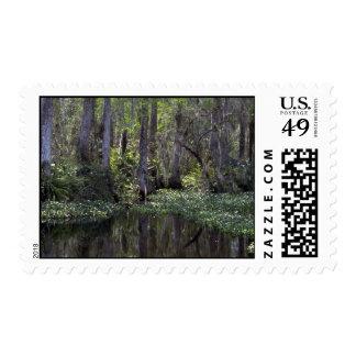 Coto grande de Cypress, la Florida Envio