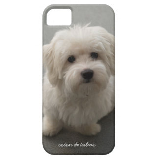 Coton de Tulear iPhone 5 Covers