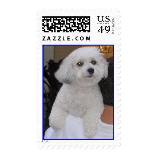 Coton de Tulear - Customized - Customized Postage Stamp