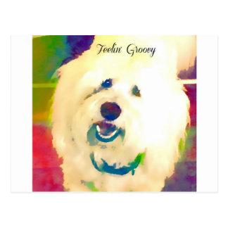 Coton de Tulear Feelin' Groovy Postcard
