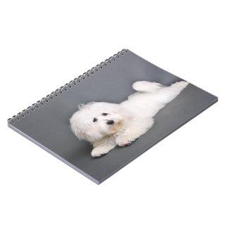 Coton de Tulear - Joci Notebook