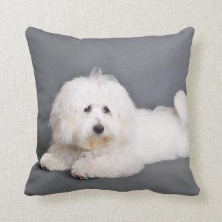 Coton de Tulear - Joci Pillow