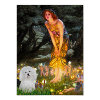 Coton de Tulear -  Midsummers Eve Posters