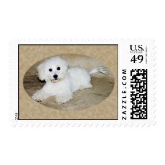 Coton De Tulear Pup Postage