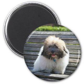 Coton de Tulear Puppy magnet