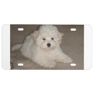 Coton_de_Tulear_puppy.png License Plate