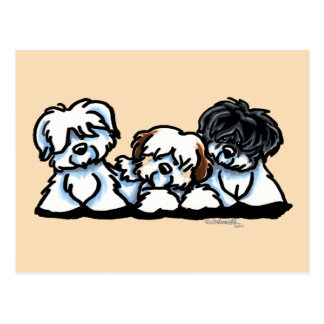 Coton De Tulear Trio Postcard