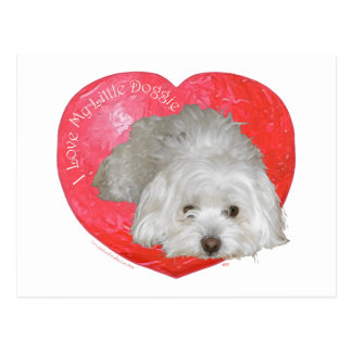 Coton de Tulear Valentine's Day Postcard