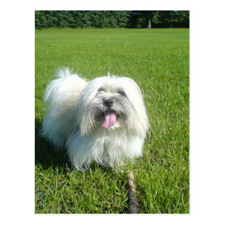 coton in grass.png postcard