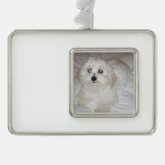 coton laying.png ornament