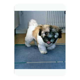 coton puppy 2.png card