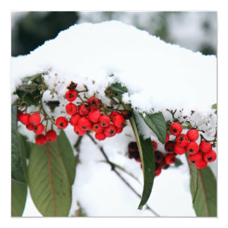 Cotoneaster Fruits with a Snow Hat Card