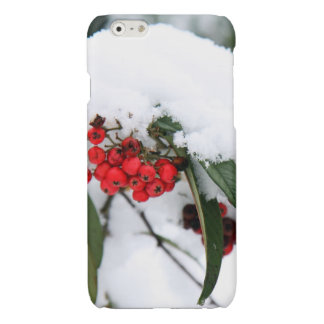 Cotoneaster Fruits with a Snow Hat Glossy iPhone 6 Case