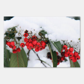 Cotoneaster Fruits with a Snow Hat Lawn Sign