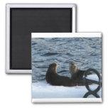 Cottage Lake Otter magnet