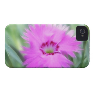 Cottage Pinks - Dianthus iPhone 4 Case