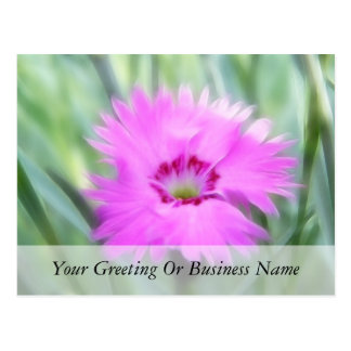 Cottage Pinks - Dianthus Postcard