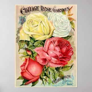 Cottage Rose Garden Drobisch Advertisement Poster