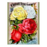 Cottage Rose Garden Postcard
