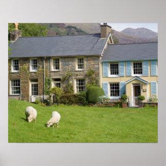 Cottages, Beddgelert, Gwynedd, Wales Poster