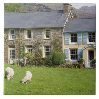 Cottages, Beddgelert, Gwynedd, Wales Tile
