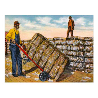 Cotton Bales in the Deep South 1920s Postcard