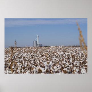 Cotton, Country, Farm, Color Poster